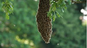 apiculteur sos